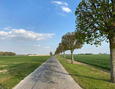 Route champêtre bordée d'arbres