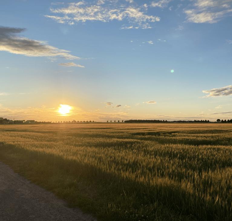 Soleil couchant sur champs à Lissy